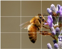use of rule of thirds in photography